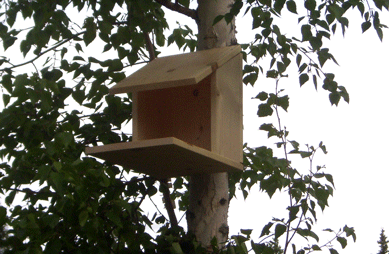 build a birdhouse plans