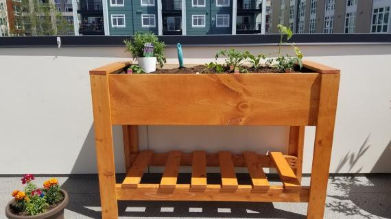 raised wood planter box